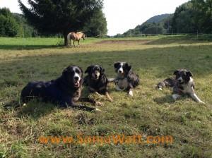 Hunde, Hundeverhalten, Hundepsychologie, Hundetraining,