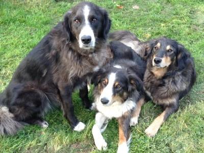 Hundetraining, Hunde trainieren, Hunde, Hund, Hunde verstehen, Hundekommunikation, Barf, Hundesprache, Hunderudel, Hundemeute, Meute, Rudel